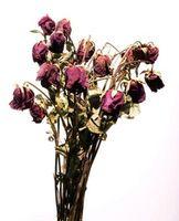 Slik holder Roses i en vase Alive