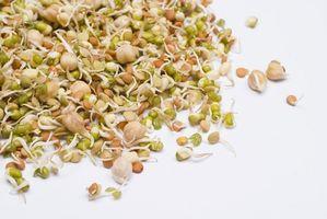 Hvordan Grow Alfalfa frø
