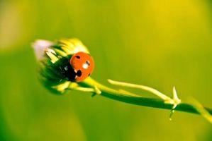 Hvordan stoppe bugs fra Spise en grønnsakshage