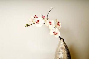 Hvordan Grow Orchids Fra frø