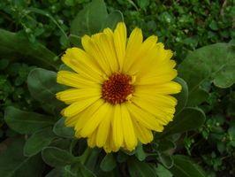 Blomster til Plant i november