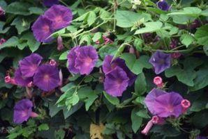 Best Flowers for Spring & Summer