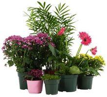Har Planter vokser best i jord, gjødsel eller vann?