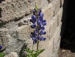 Lave vedlikeholds Blomster til Plant