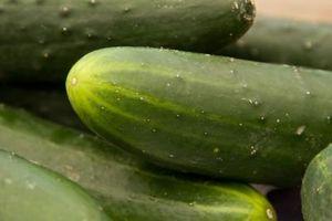 Hvordan Grow Klatring Agurker