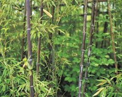 Bamboo Planter for Outdoors