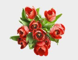 Blomster som betyr ubetinget kjærlighet