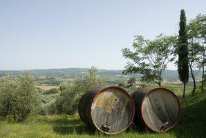 Hvordan ta vare på en italiensk Blue Cypress