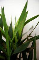 Typer av tropiske huset planter