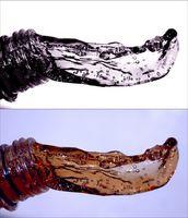Hvordan kalsiumklorid fjerne vanndamp?