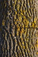 Hvorfor gjør mest Moss Grow på nordsiden av treet?