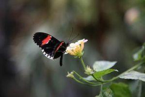 Blomster, Nektar & flygende insekter