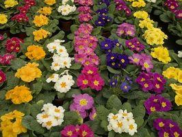 Tips om Landscaping for en over bakken pool