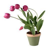 Hvilke Pots å bruke for innendørs planter