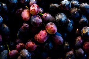 Når skal Gjødsle en Grape Arbor