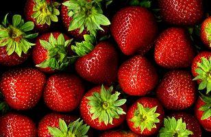 Tidlig Grow jordbærplanter