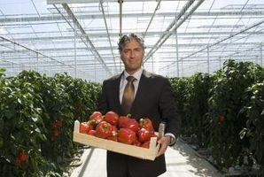 Pryd Pepper Planter som er giftige