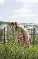 Hvordan Grow Flowers Fra Seed Ved hjelp av en bærbar drivhus