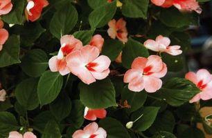 De beste plantene for sone 6