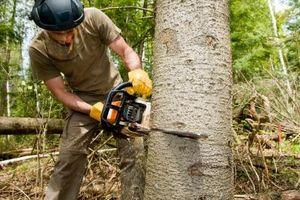 Slik fjerner en Camden treet