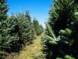 Regulering av fjerning av trær i Wayne County, Michigan