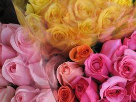 Floral Design Training