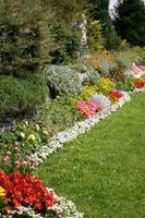 Årlige Blomster til Plant i full sol