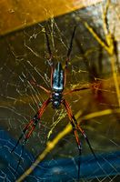 Hvordan bli kvitt edderkopper under takskjegget av My House