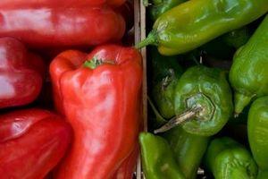Hvordan Grow Pepper planter fra frø