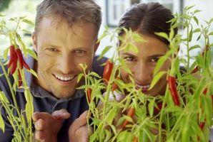 Slik Care for Potte Pepper Plants