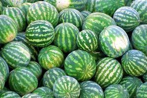 Den voksende soner for Vannmeloner