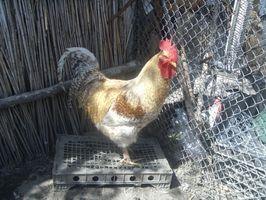 Hvordan koble Chicken Wire