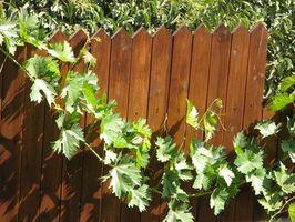 Hvordan å opprettholde en Cedar Fence