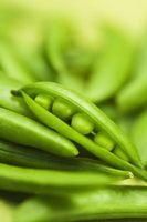Hvordan Grow Peas i blomsterkasser