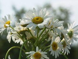 Hvordan Ordne blomster enkelt