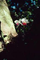 Skygge strukturer for Orchids