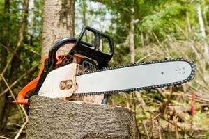 Motorsag for stein for Killing tree stumps with motor oil