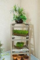 Hvordan Grow Vegetabilske planter innendørs i vinter
