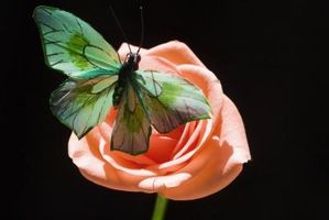 Hvordan lage Butterflies & Roses i april