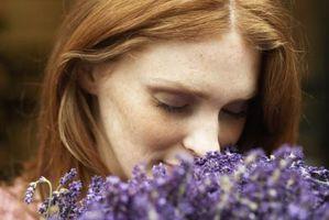 Hage blomster som er Duftende & frastøte insekter