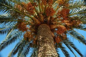 Hvordan fikse en Big Hole i en Palm Tree