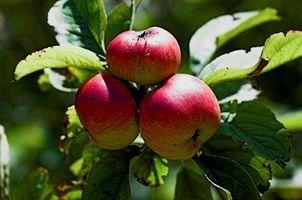 Hvordan produsere frukt trær i Siskiyou County, California