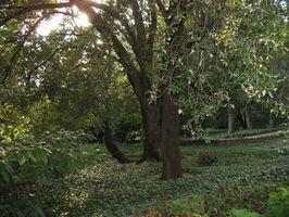 Hva du skal plante i en skyggefull hage