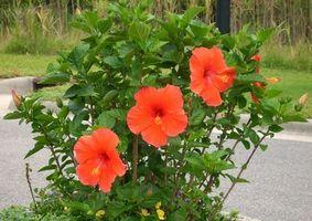 Alger og evolusjon av blomsterplanter