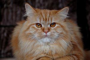 Hvordan få Cat Urin Out of Knitting Garn