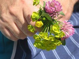 Blomster som betyr Takk