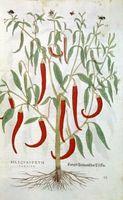 Hvordan å beskjære Cayenne Pepper Planter