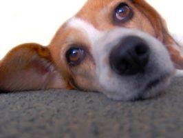 Eddik For Pet urin lukt