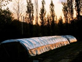 Hvordan Grow Hothouse & Indoor Grønnsaker