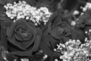 svarte lus på planter